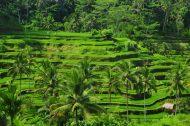 Film Démonstration Esthétique : Pliritane : Massage Balinais du Cuir Chevelu